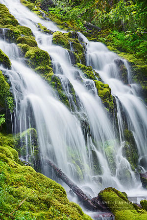 Waterfall Upper Proxy Falls - North America, USA, Oregon, Lane, Upper Proxy Falls (Cascade Range, Willamette National Forest)...