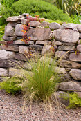 Dry stone wall colonised by sedums and other alpines at 2 Durnamuck, Little Loch Broom, Wester Ross in July