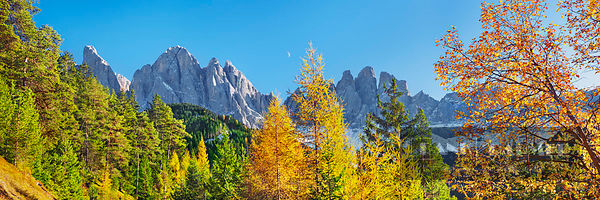 Mountain impression Gruppo delle Odle and larches in autumn - Europe, Italy, Trentino-Alto Adige, South Tyrol, Puez-Geisler N...