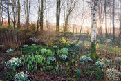 Dawn breaks on a winter morning at Higher Cherubeer, Devon, casting sunlight through the woodland on the edge of the garden, ...