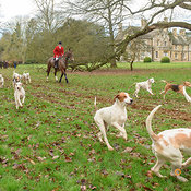 The Cottesmore Hunt at Bisbrooke Hall 8/2