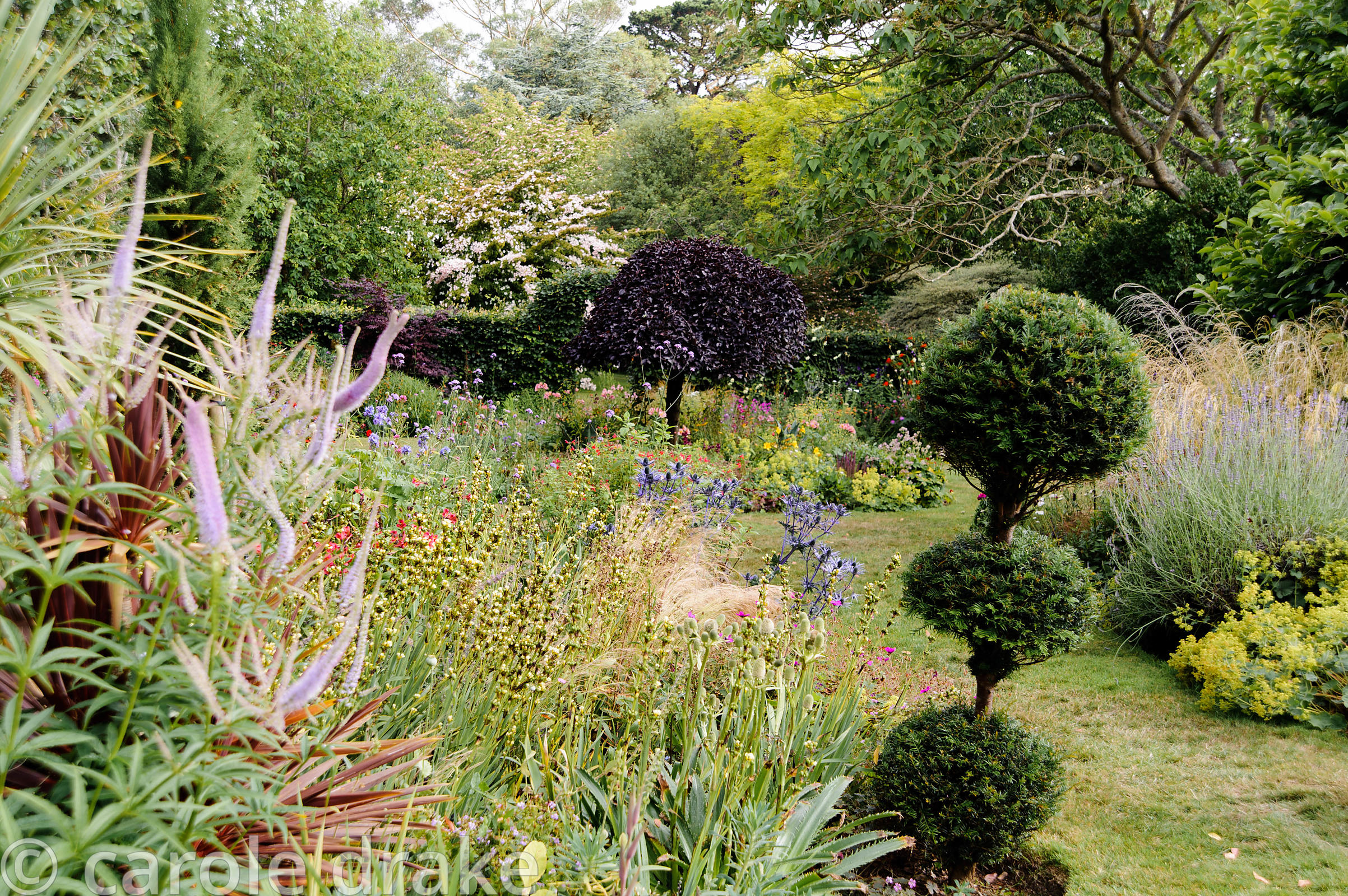 A tiered topiary yew marks a transition to the lower garden surrounded by Eryngium agavifolium, Veronicastrum virginicum 'Fas...