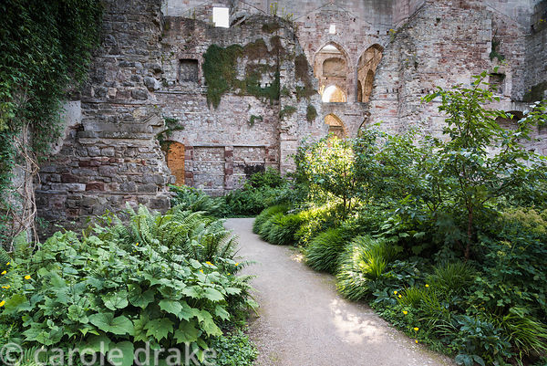 Sunlight shafting down through the ruined shell of Lowther Castle, Penrith, Cumbria in July into the Garden in the Ruins with...