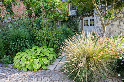 The Courtyard Garden designed by Piet Oudolf and John Coke features combinations of grasses and perennials including hostas, ...