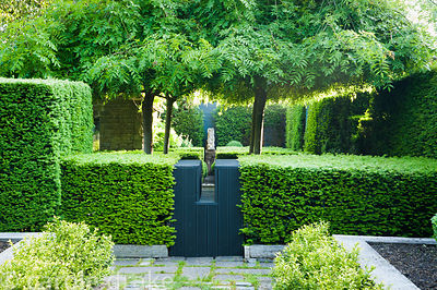 View over yew hedges into a courtyard with four trained weeping ash, Fraxinus excelsior 'Pendula' and a sculpture by David En...