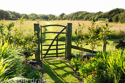 Simple paling gate leading out of the kitchen garden into the meadow at Sea View, Cornwall in June