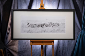 Lion Walk No.1: 2019: Photographer: Neil Emmerson:  £975 including UK VAT