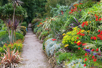 A path leading along the sloping garden is framed by bright Crocosmia 'Lucifer', phormiums, euphorbias, gazanias and cordylines.