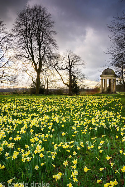 Temple of the Four Winds in the Wild Garden surrounded by naturalised daffodils at Doddington Hall, Lincolnshire in March