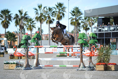 Oliva, Spain - 2019 November 17: Gold tour 1m50 - GP during CSI Mediterranean Equestrian Autumn Tour 2.(photo: 1clicphoto)