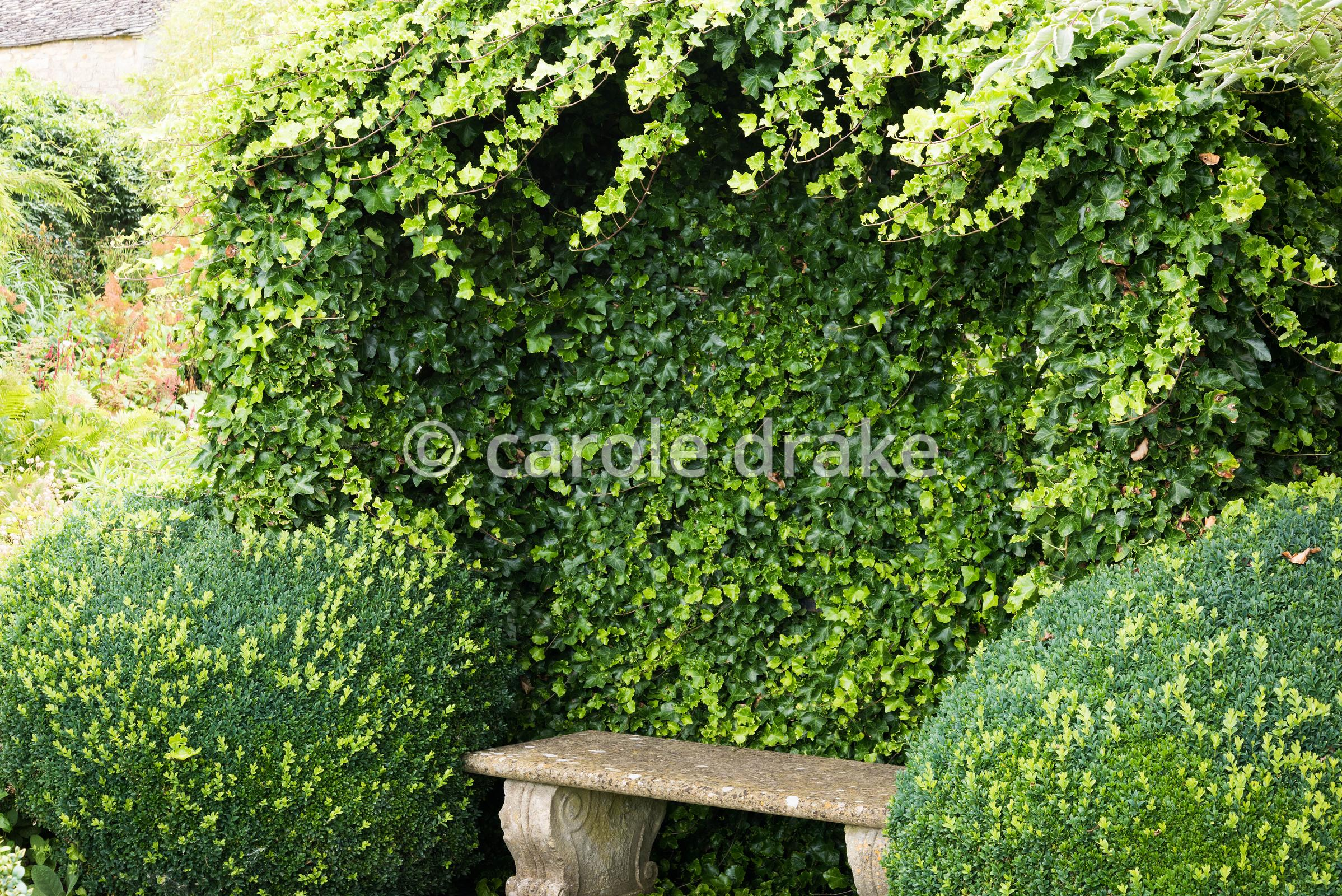 Ivy clad arbour framed by clipped box balls in the Knot Garden at Bourton House, Moreton-in-Marsh in August
