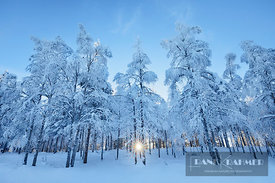Boreal forest with snow covered birches in winter - Europe, Finland, Northern Ostrobothnia, Ruka, Kitka (Lapland) - digital