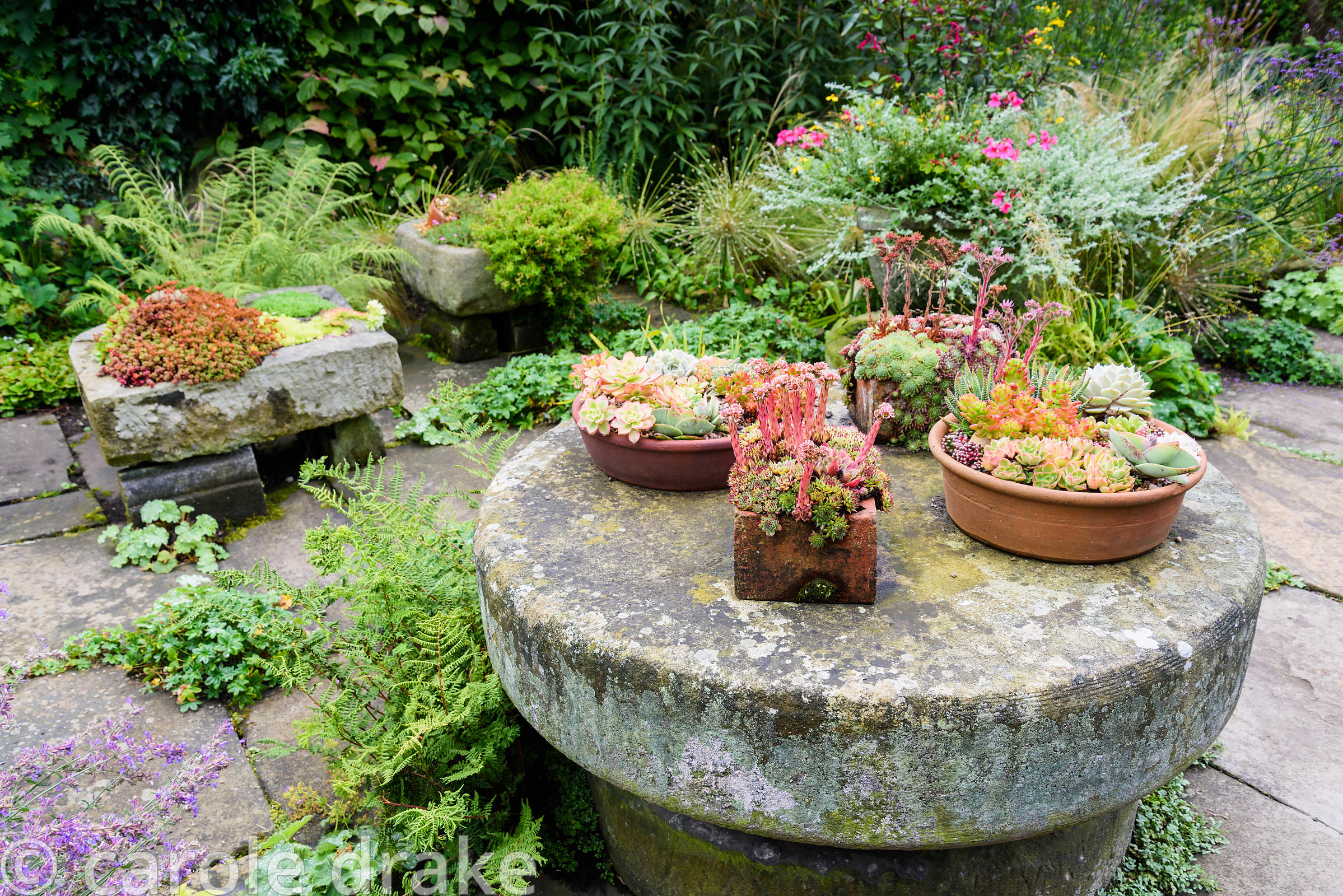 Terracotta pans and bricks planted with succulents including sedums, sempervivums and aeoniums at York Gate Garden, Adel in July