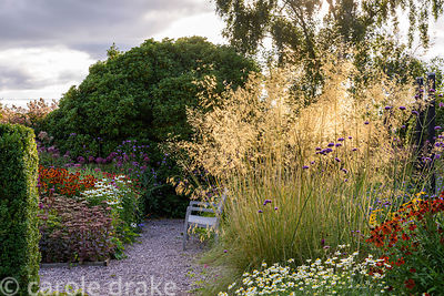 Bench on a gravel path surrounded by a prairie planting inspired mix of grasses and herbaceous perennials including Stipa gig...