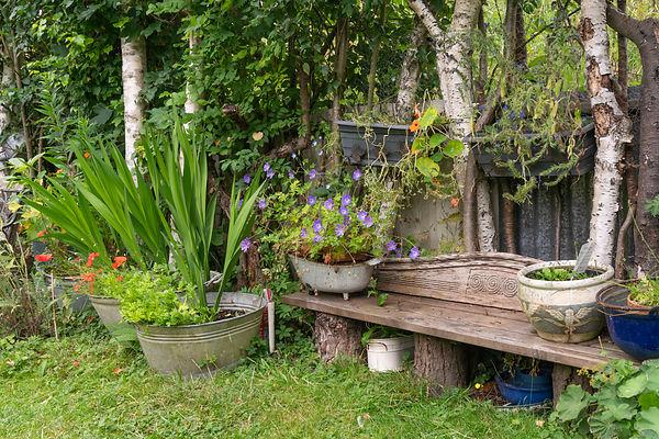 bench near the birches with planters and flowering plants