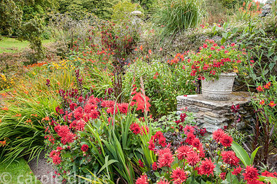 Hot border below the house bursting with colour, includes crocosmias, dahlias, gladioli, antirrhinums, alstroemerias and red ...