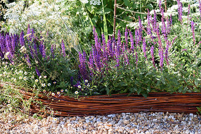 Border of Salvia nemerosa 'Caradonna' and Erigeron karvinskianus with woven willow edging at Malthouse Farm, Hassocks, Sussex