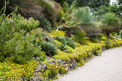 Sunny bank planted with an array of tender and southern hemispheres shrubs and trees including proteas, restios, succulents a...