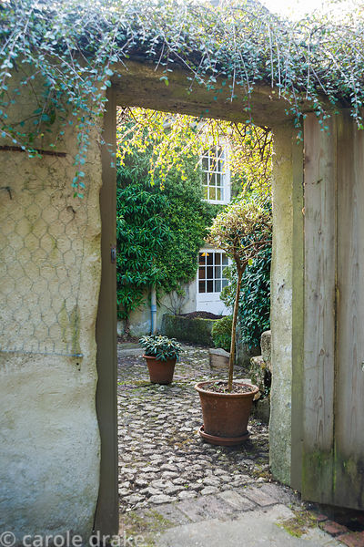 View through doorway to back of house clothed with evergreens past pots of standard euonymus and rhododendron. Bosvigo, Truro...