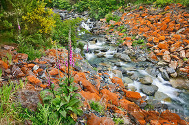 Brook with lichens on rocks - Oceania, New Zealand, South Island, West Coast, Westland, Taramakau River, Jacksons, Rocky Cree...