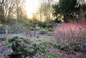 Frosty January morning in th Winter Garden at Mottisfont with colourful dogwoods and white stemmed birches