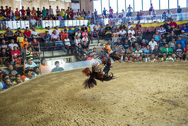 Sabong cockfighting