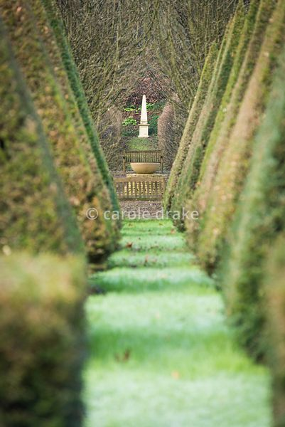 Avenue of clipped yews leading the eye to a stone obelisk at the Old Rectory, Netherbury in January