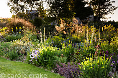 Border catching evening sunlight in July at 2 Durnamuck, Little Loch Broom, Wester Ross planted with sedums, erigeron, sangui...