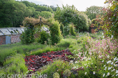 Beds full of lavender, allium seedheads and deep red heuchera surrounding obelisks supporting clematis and beside Victorian g...