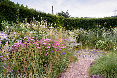 Bench surrounded by tall herbaceous perennials and grasses including white daisy Erigeron annuus, pink Achillea, pink Monarda...