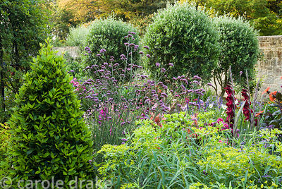 Standard olives and clipped bay pyramids are surrounded by a sea of colour including Verbena bonariensis, euphorbias and glad...