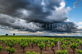 le vignoble nantais