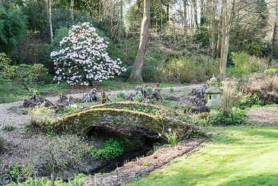 Bridge and stone temple lantern beside the stream with woodland planting beyond including large flowered rhododendron. Melpla...
