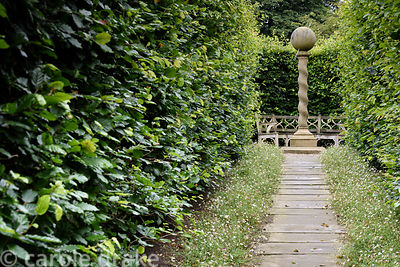 Path between beech hedges fringed with Erigeron karvinskianus, leads toward a barleysugar column mounted with a stone ball at...