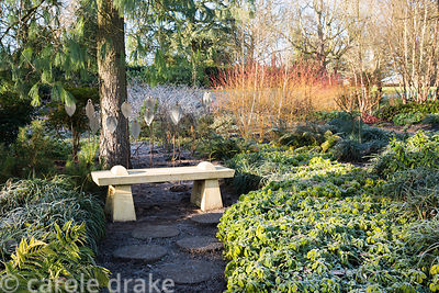 Bench surrounded by ground cover foliage including Pacysandra terminalis and ferns with colourful dogwoods beyond in the Wint...