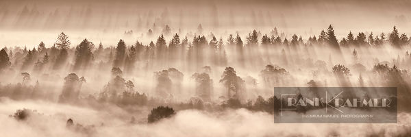 Fog impression in Pupplinger Au - Europe, Germany, Bavaria, Upper Bavaria, Bad Tölz-Wolfratshausen, Icking, Schlederloh (Pupp...