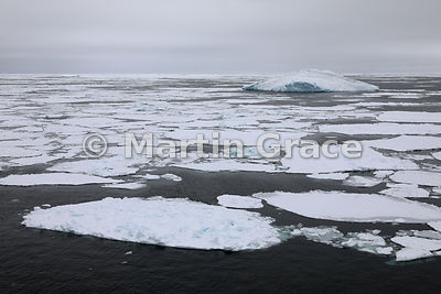 Sea ice at Latitude S63°43', Longitude W56°17', Weddell Sea, Antarctic Peninsula,  Antarctica