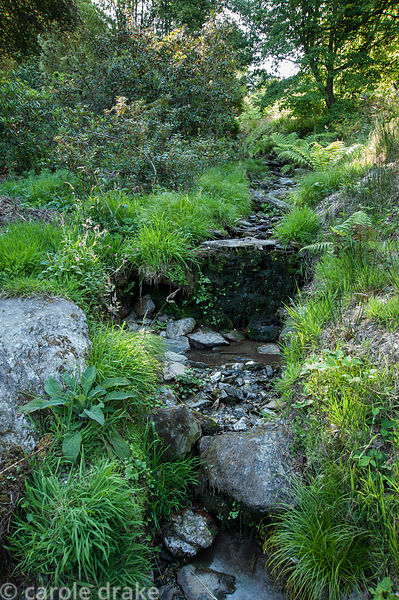 Stream that runs through the valley garden surrounded by ferns, grasses and wild flowers in the lower, more naturalistic part...