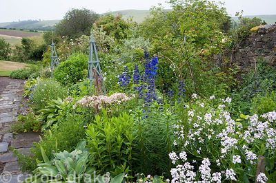 Mixed border with honesty, delphiniums and hostas and views of Cheviot hills beyond. Mindrum, nr Cornhill on Tweed, Northumbe...