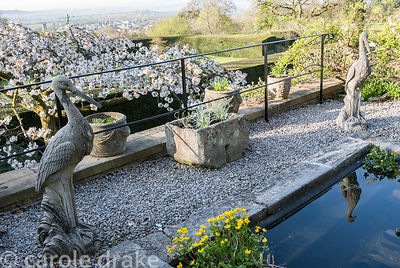 Stone-edged lily pond with marsh marigolds in the corner and stone birds standing by, with white form of Prunus 'Taihaku', be...