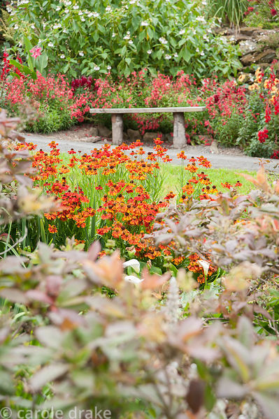 Bench surrounded by hot colours of penstemons, antirrhinums and dahlias with white flowered Impatiens tinctoria, and orange h...
