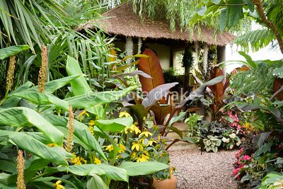 Lush foliage plants frame the Jungle Hut at Oak Barn, Newark, Notts in September including hedychiums, cordylines, Tetrapanax...