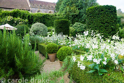 Box parterre near the house contains Nicotiana alata, Salvia sclarea var turkestanica, caryopteris, rosemary and Verbena bona...