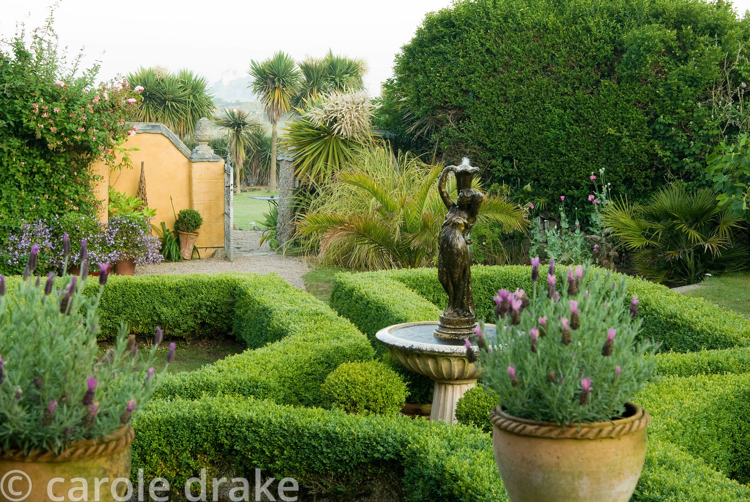 Box parterre with central water feature and pots of French lavender in foreground. Through the gate beyond are cordylines tha...