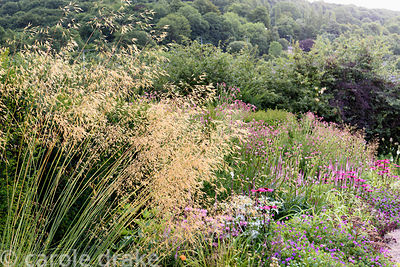 Stipa gigantea frames the pink border featuring Echinacea 'Pink Glow', Hylotelephium 'Matrona', Veronicastrum virginicum 'Eri...