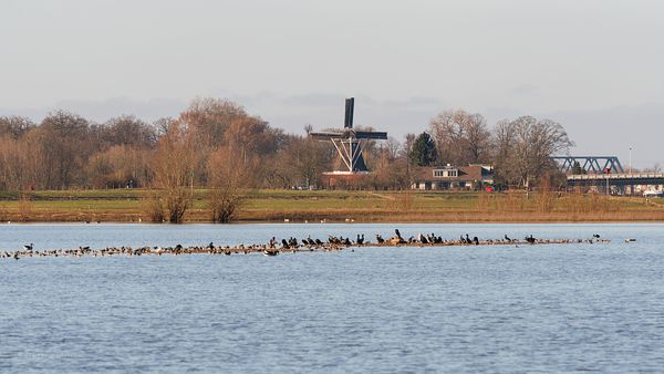 Bolwerks windmill and flooded river forelands