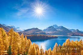 Larch forest at Silser See (lat. larix decidua) - Europe, Switzerland, Graubünden, Engadin, Silsersee, Sils (Alps, Rhaetian A...