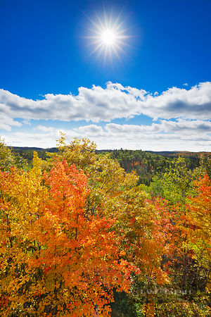 Deciduous forest with sugar maples in autumn colours - North America, Canada, Ontario, Nipissing, Algonquin Provincial Park, ...