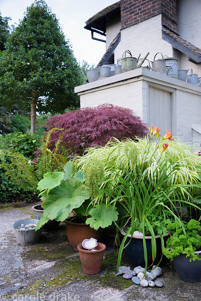 Group of pots planted with an acer, variegated grass, lobelia, hemerocallis and day lilies below a collection of galvanised w...