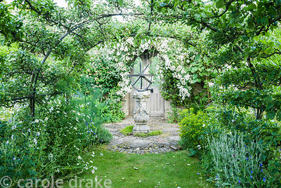 Apple tunnel with sundial at end framed by Rosa 'Rambling Rector'.  Private garden, Dorset, UK